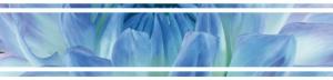 Cerrol Bellini Azul бордюр