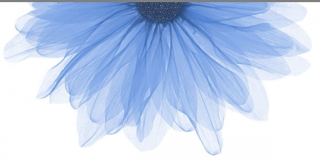 Polcolorit Art Soffio Blue декор