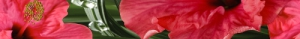 Cerrol Imperia Hibiscus бордюр